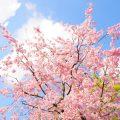 春は体調が崩れやすい。